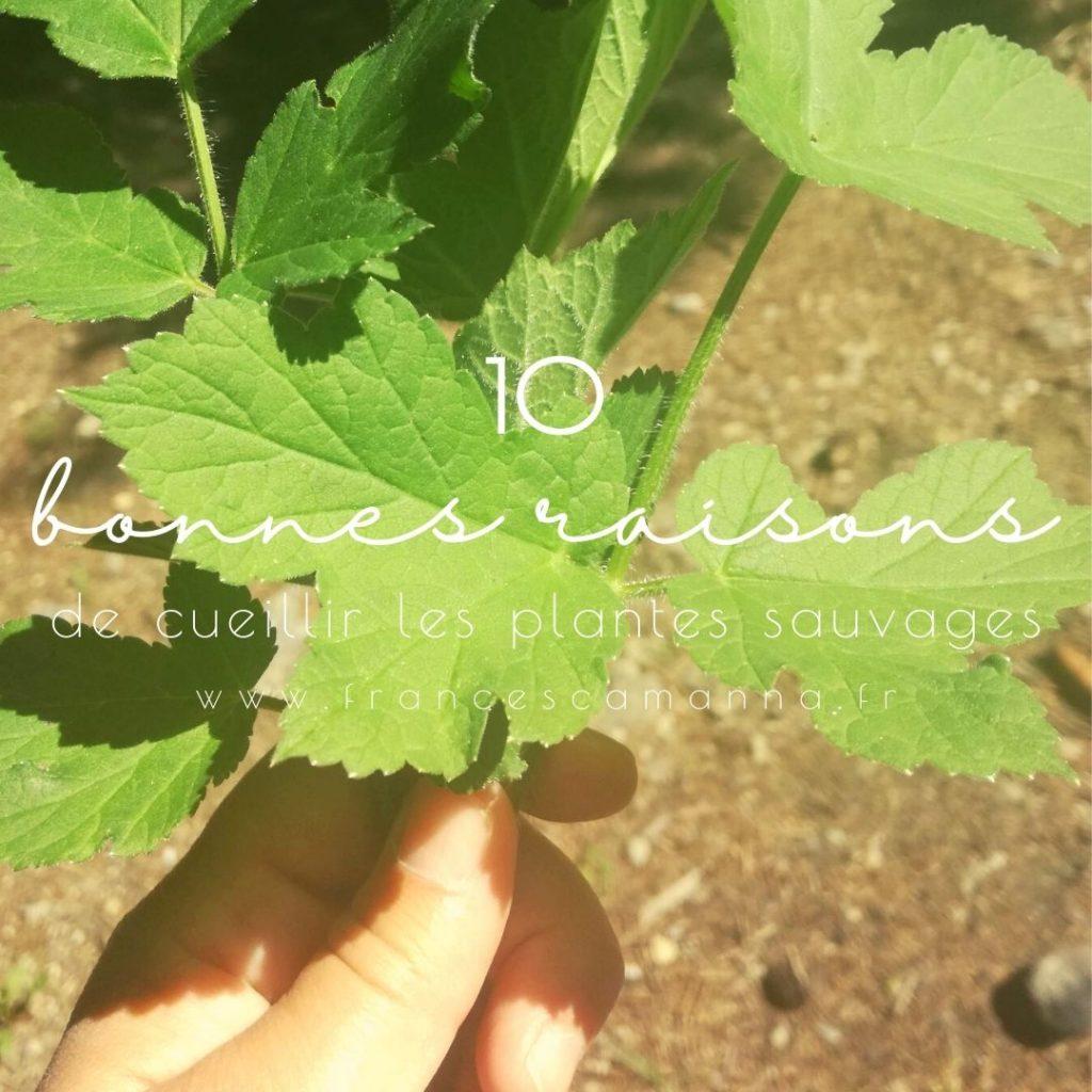 10 bonnes raison de cueillir les plantes sauvages comestibles